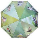 Regenschirm-Vögel