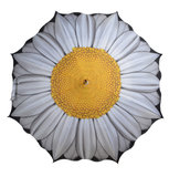Regenschirm mit Gänseblümchen_