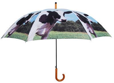 Kühe Regenschirm