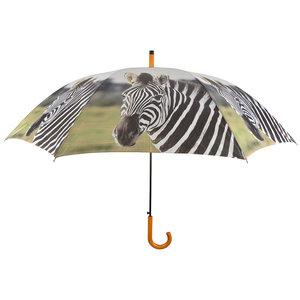 Zebra Regenschirm